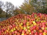 Tauschaktion 2016: 7 kg Äpfel gegen Saft